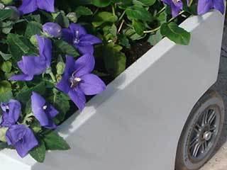flowerfoot